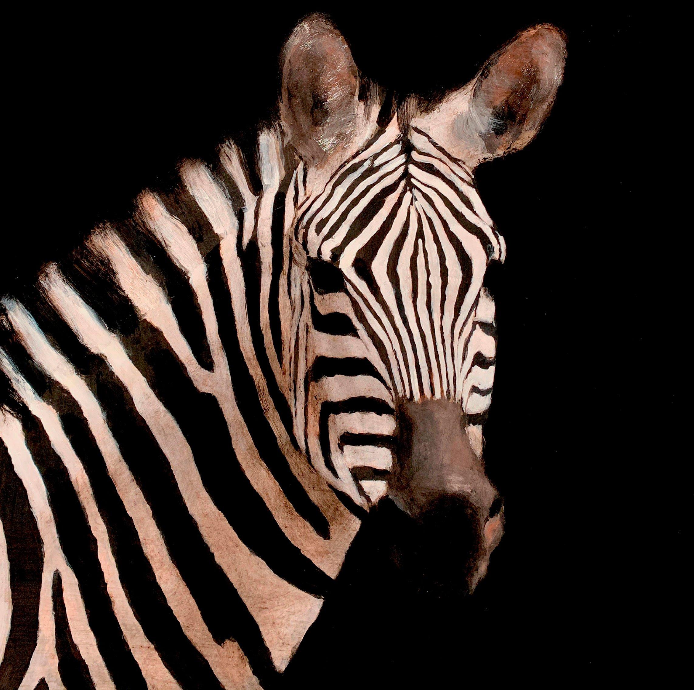 zebra_macaya