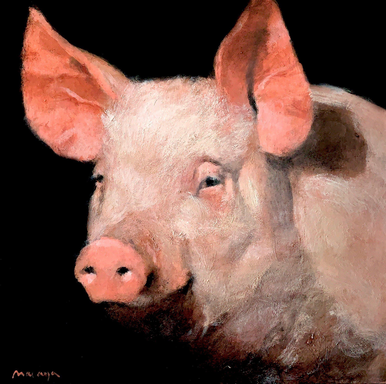cerdo_miguelmacaya