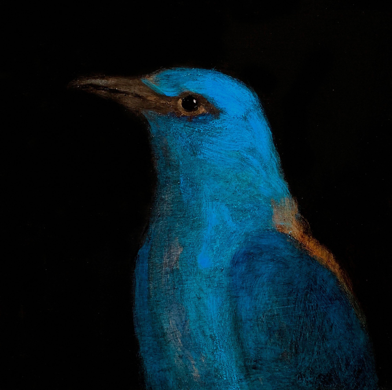 pájaro_macaya
